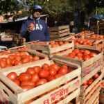 Ofrecen tomate a G. 3.000, en varios puntos