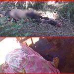 Hallan dos cadáveres en Minga Guazú