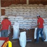 Productores de San Estanislao asistidos por el MAG anuncian buena cosecha de sésamo