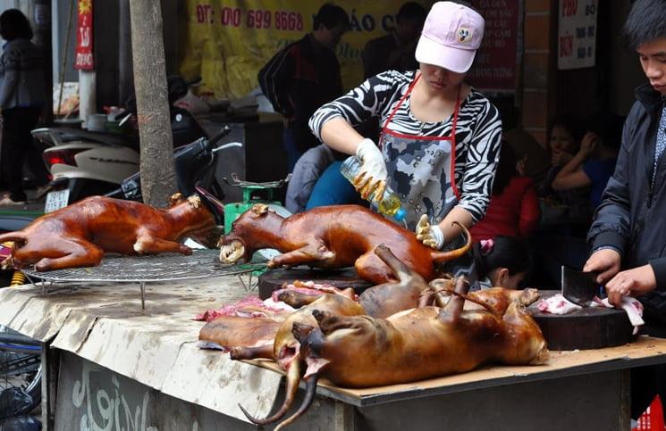 China abrió su feria anual de carne de perro en plena pandemia mundial